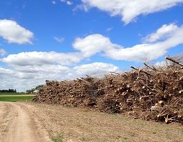 Kaip tinkamai sutvarkyti apleistas žemes Jūsų žemės sklype?