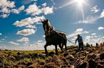 Keičiasi žemdirbių aptarnavimo tvarka trijose seniūnijose