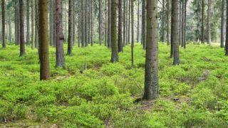 Kviečiame visuomenę dalyvauti svarstant Panevėžio apskrities miškų tvarkymo schemą