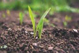 KPP priemonė Išimtinė laikina parama ūkininkams ir MVĮ