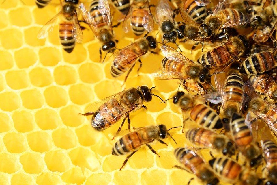 Parama už papildomą bičių maitinimą